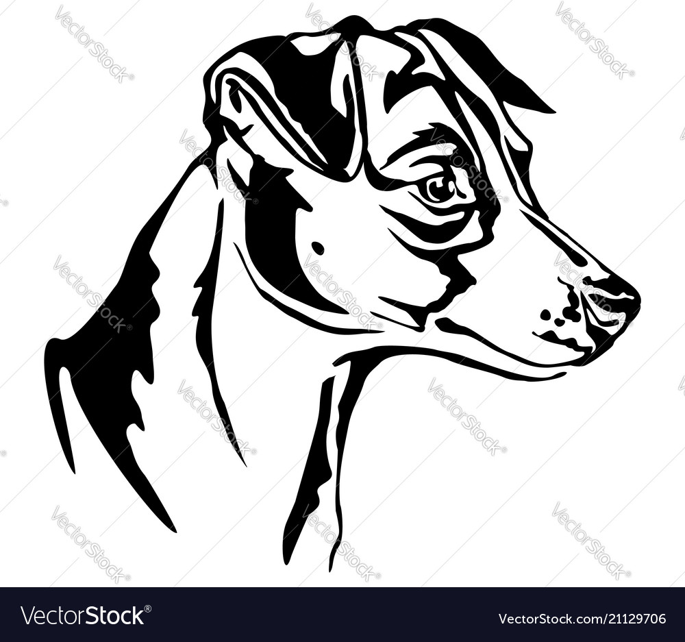 Decorative portrait of jack russell terrier