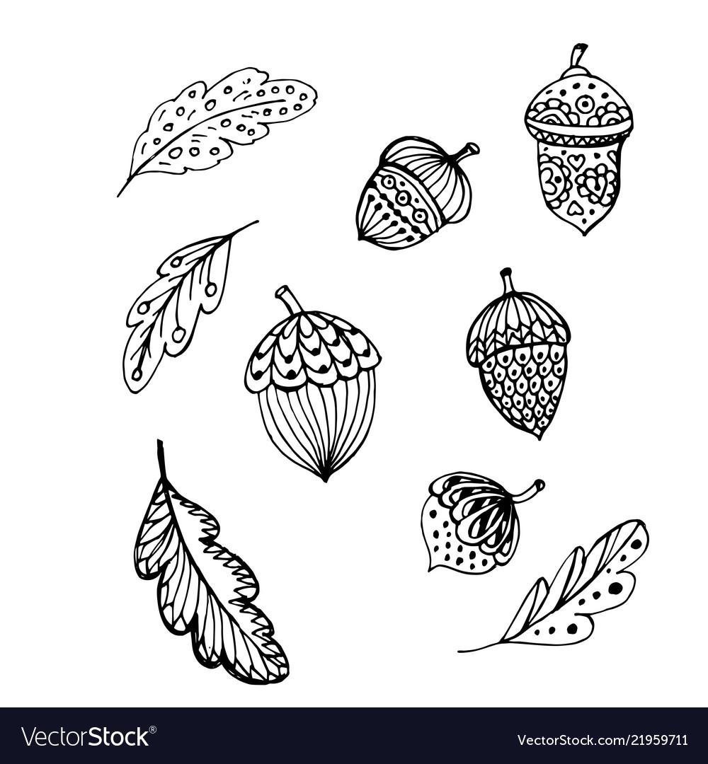 Doodle acorns and leaves black outline