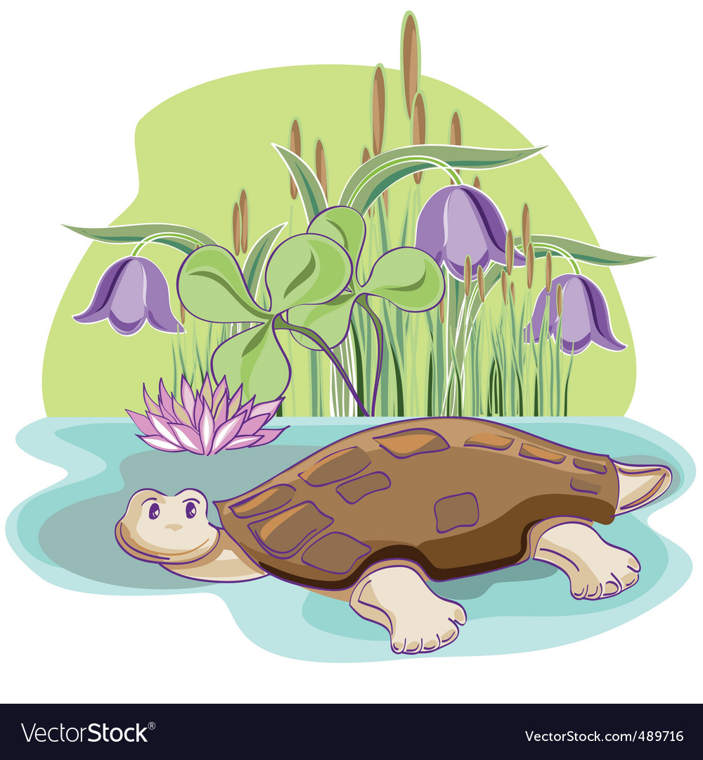 Cartoon tortoise vector image