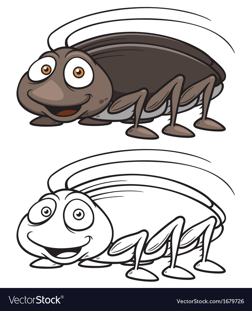 Cockroach vector image