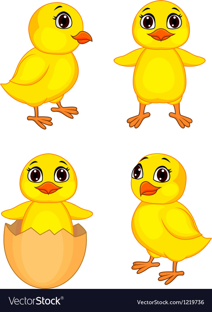 Funny chick cartoon vector image