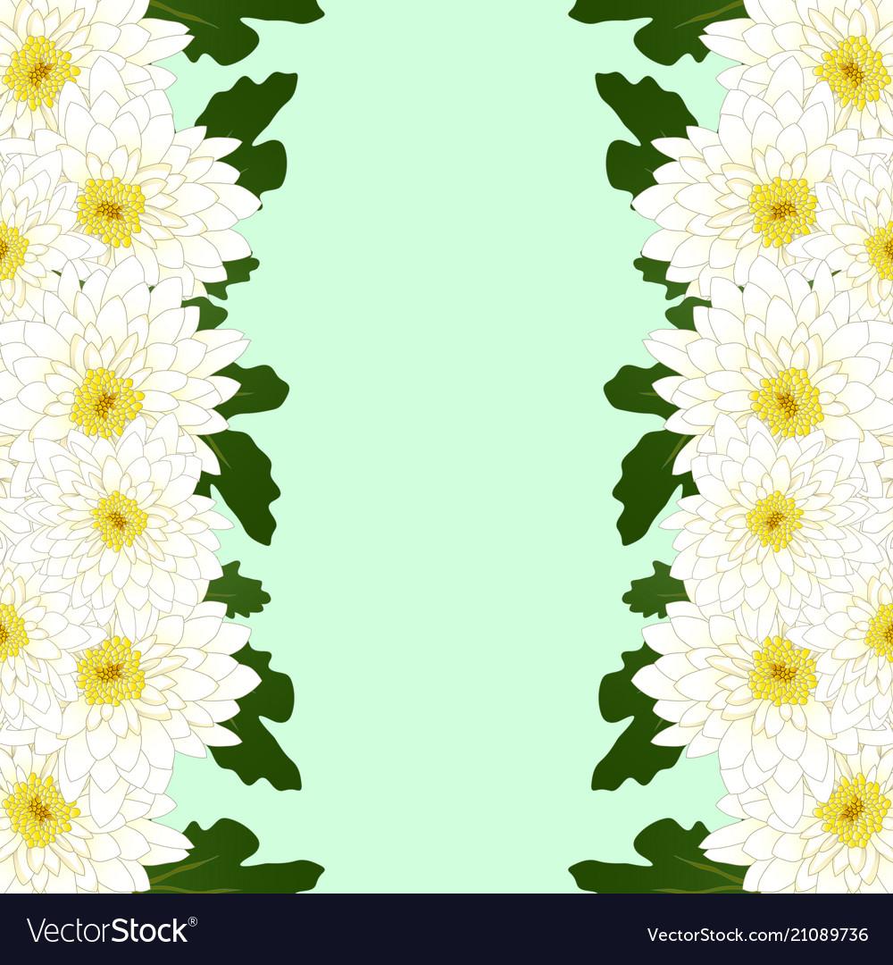 White mum chrysanthemum flower border royalty free vector white mum chrysanthemum flower border vector image mightylinksfo