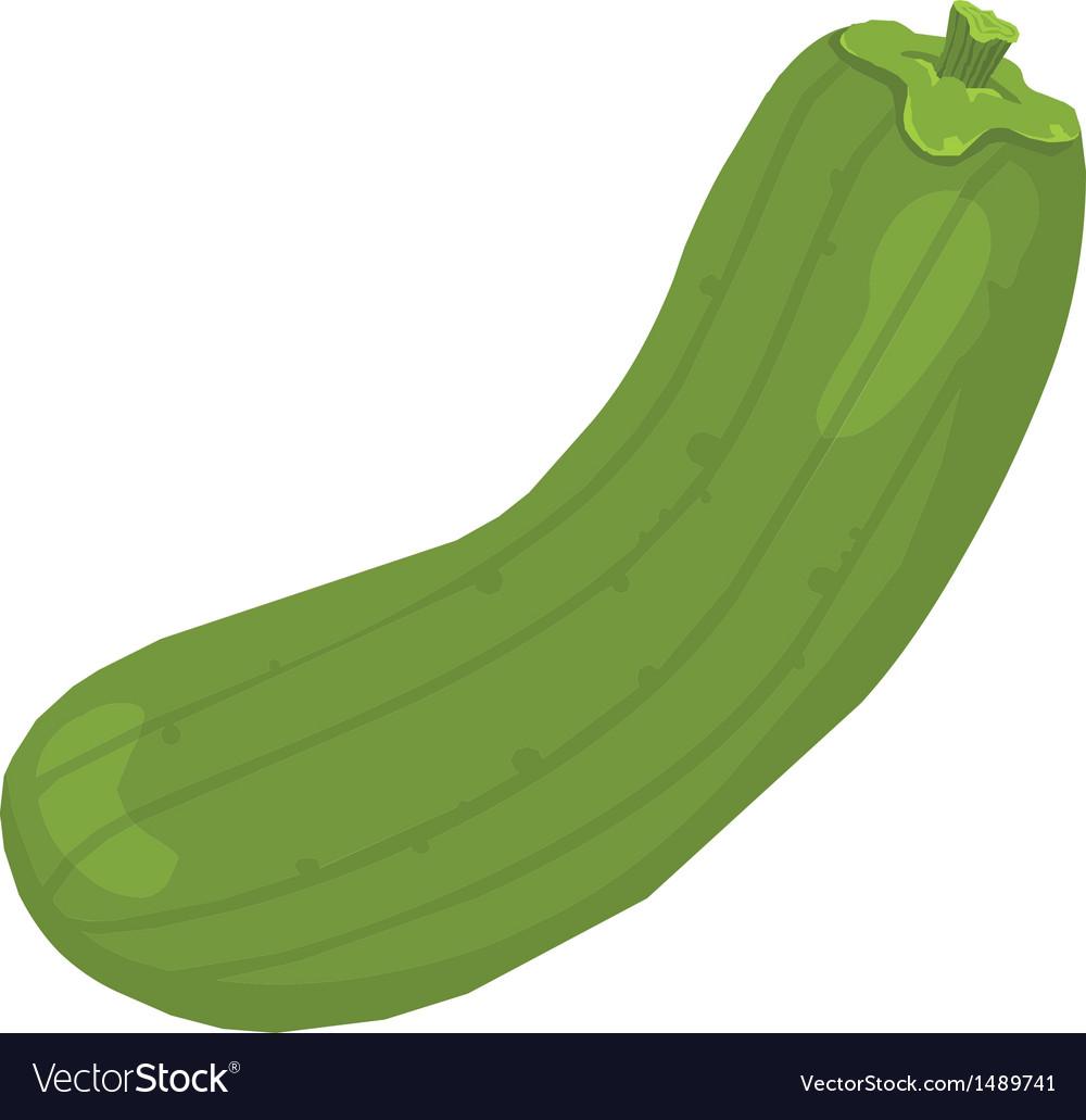 Melon fruit vector image