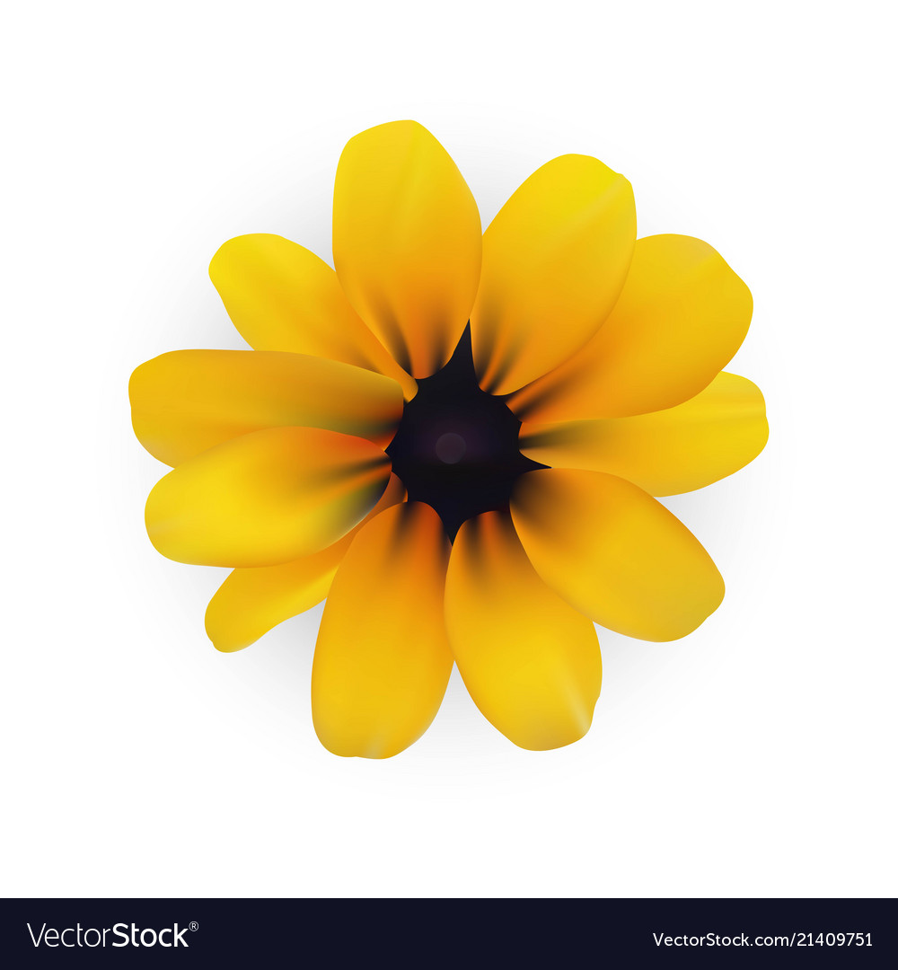 Yellow Flower Eps File Royalty Free Vector Image