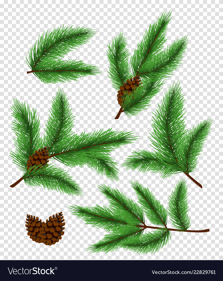 Set of bright green color pine