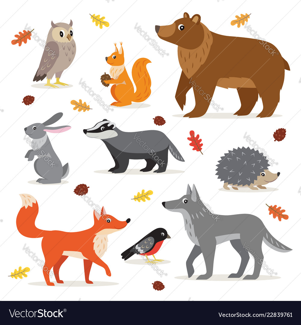 Set of forest woodland animals isolated