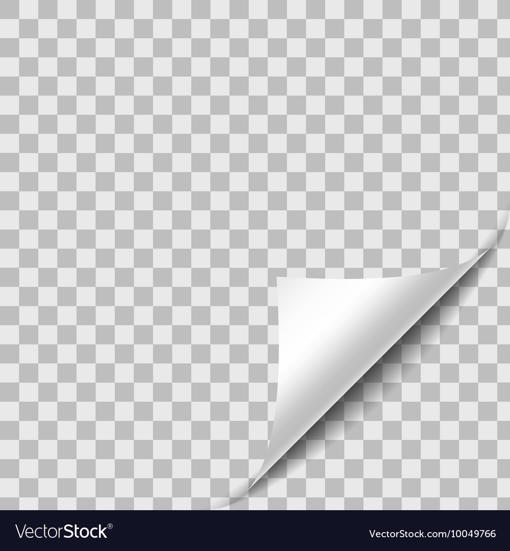 Curled Paper Sheet Corner With Shadow Design vector image