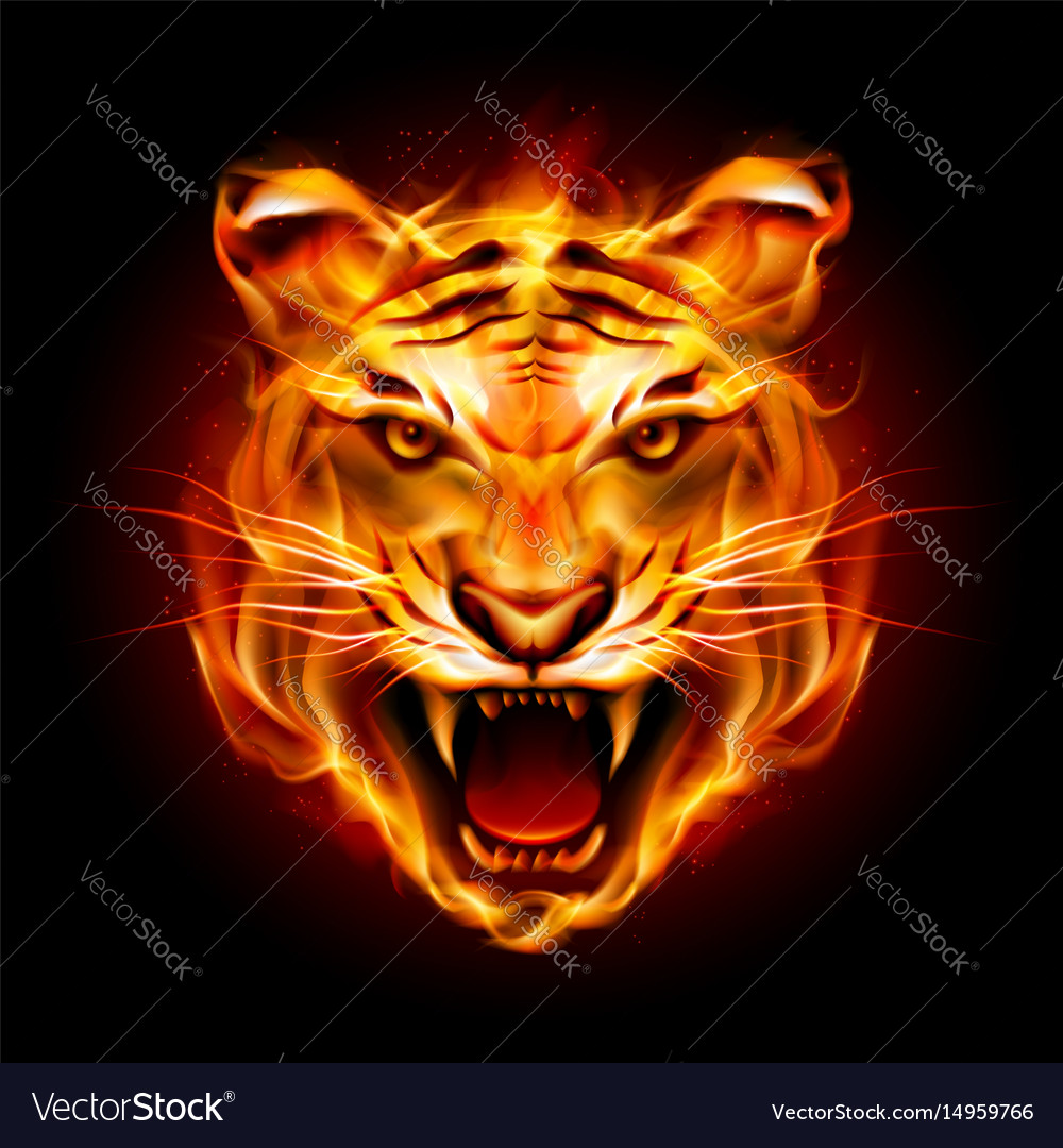 Head of a tiger in tongues of flame on black