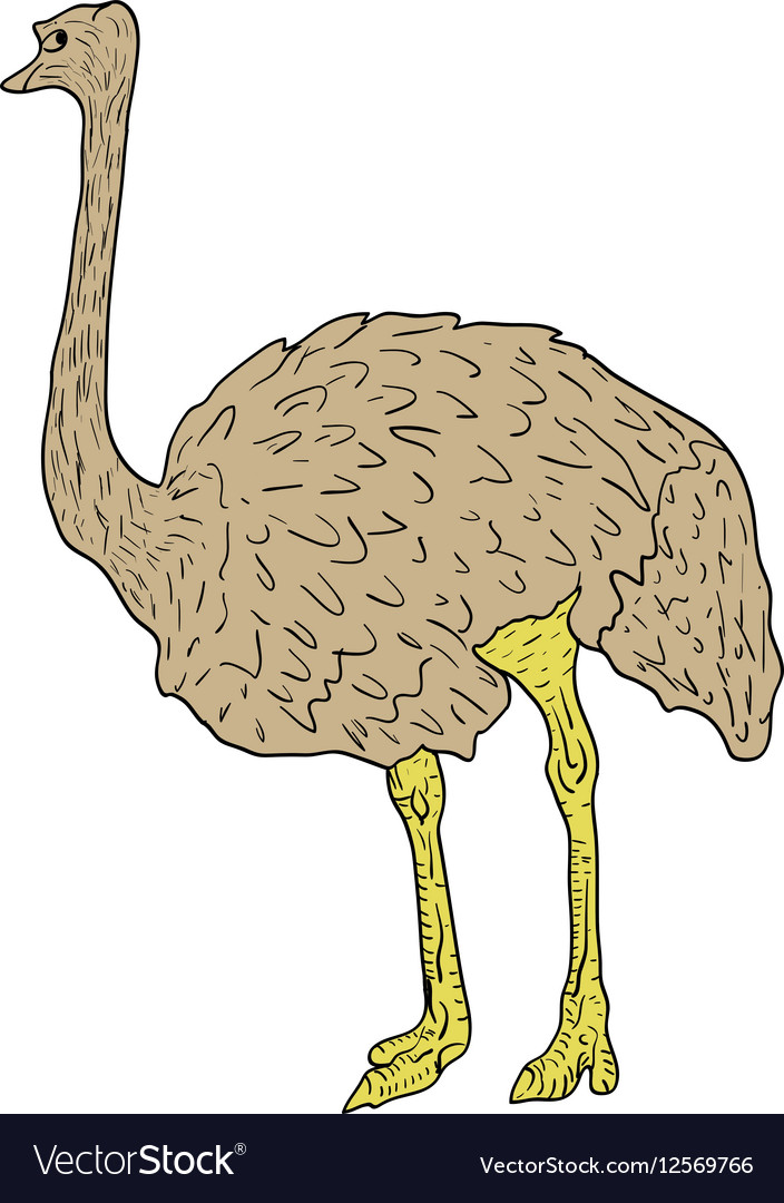 Sketch big ostrich standing on a white background