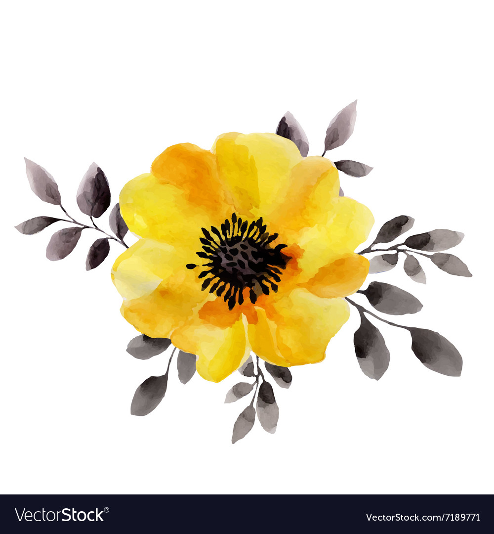 Watercolor Of Yellow Flower Isolated Royalty Free Vector