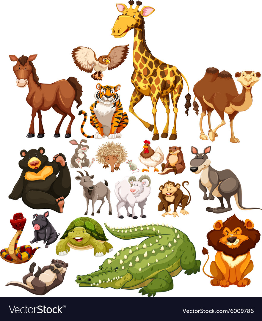 Different type of wild animals Royalty Free Vector Image