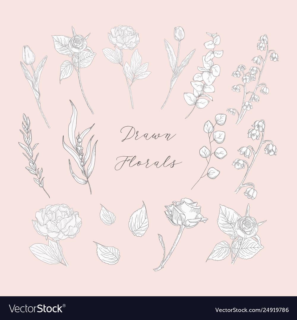 Hand drawn florals flowers plants herbs