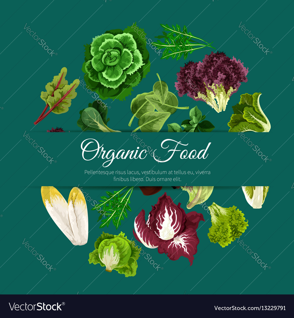 Leafy salads vegetables poster vector image