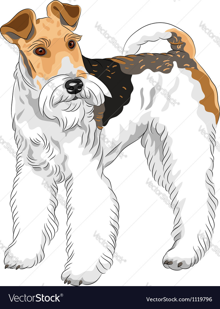 Dog Wire Fox Terrier breed standing Royalty Free Vector