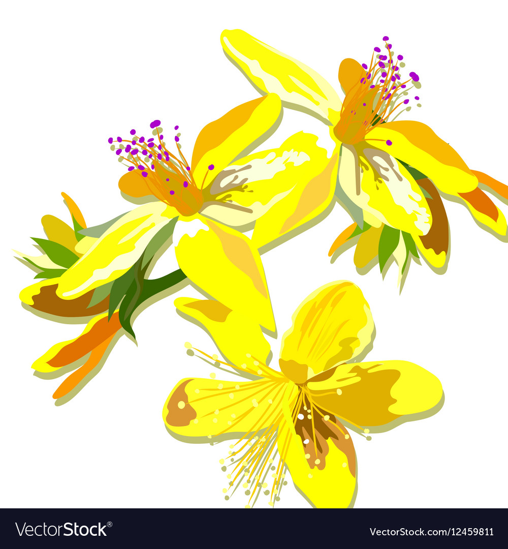 Beautiful watercolor yellow flowers card vector image izmirmasajfo