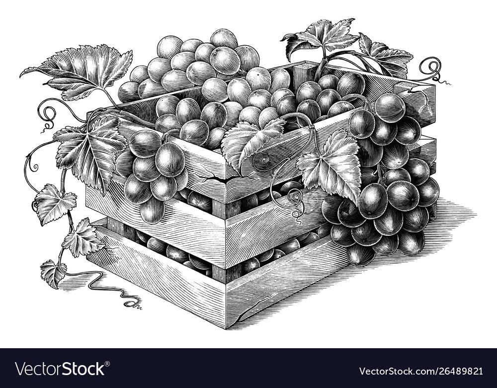 Antique engraving organic grapes in basket