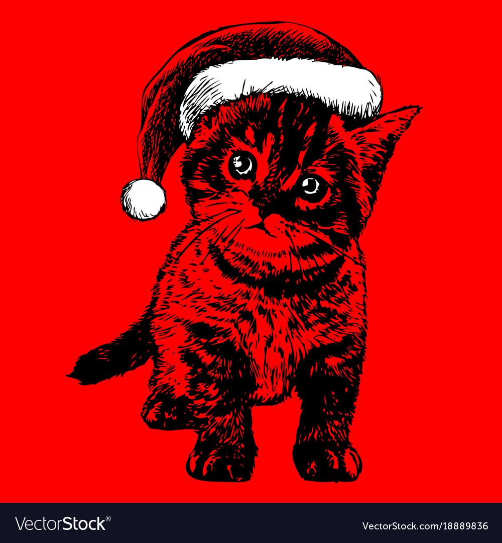 Kitten Christmas.Little Cat Kitten With Christmas Santa Hat