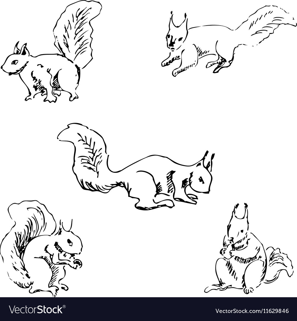 Squirrels in different positions Pencil sketch by