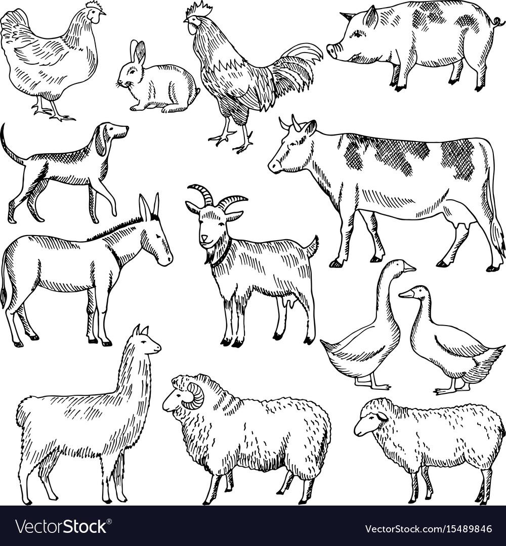 Vintage farm animals farming in hand vector image