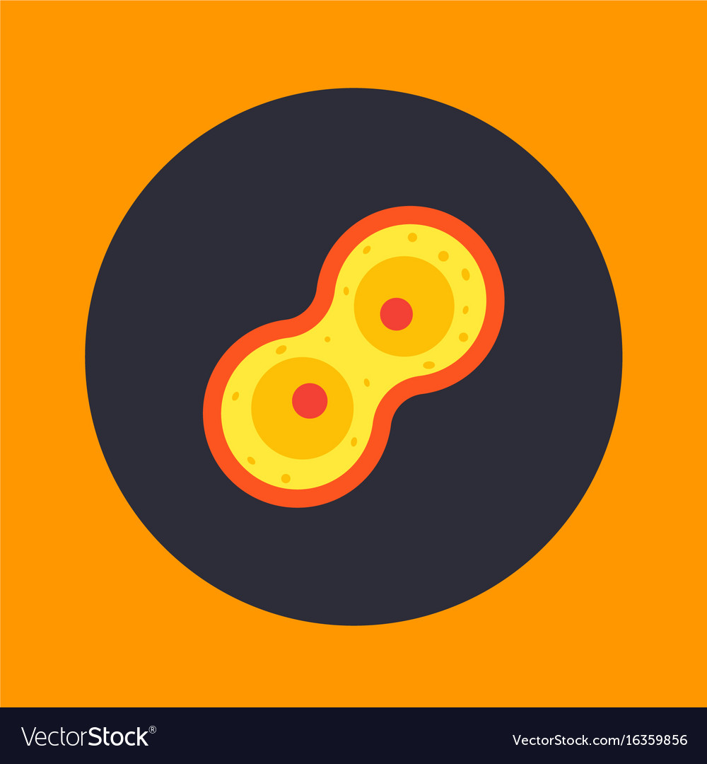 Cell division process mitosis icon