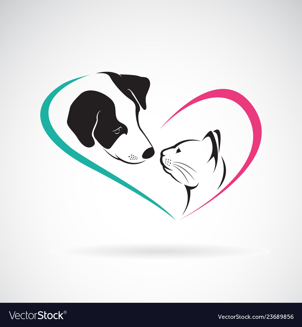 Dog and cat on a white background pet animals