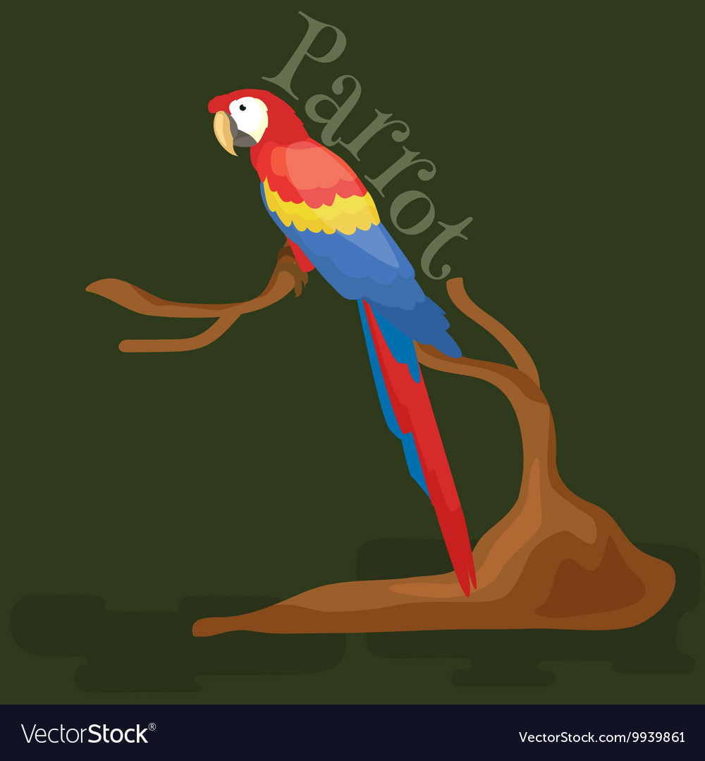 Domestic animal isolated macaw parrot with beak