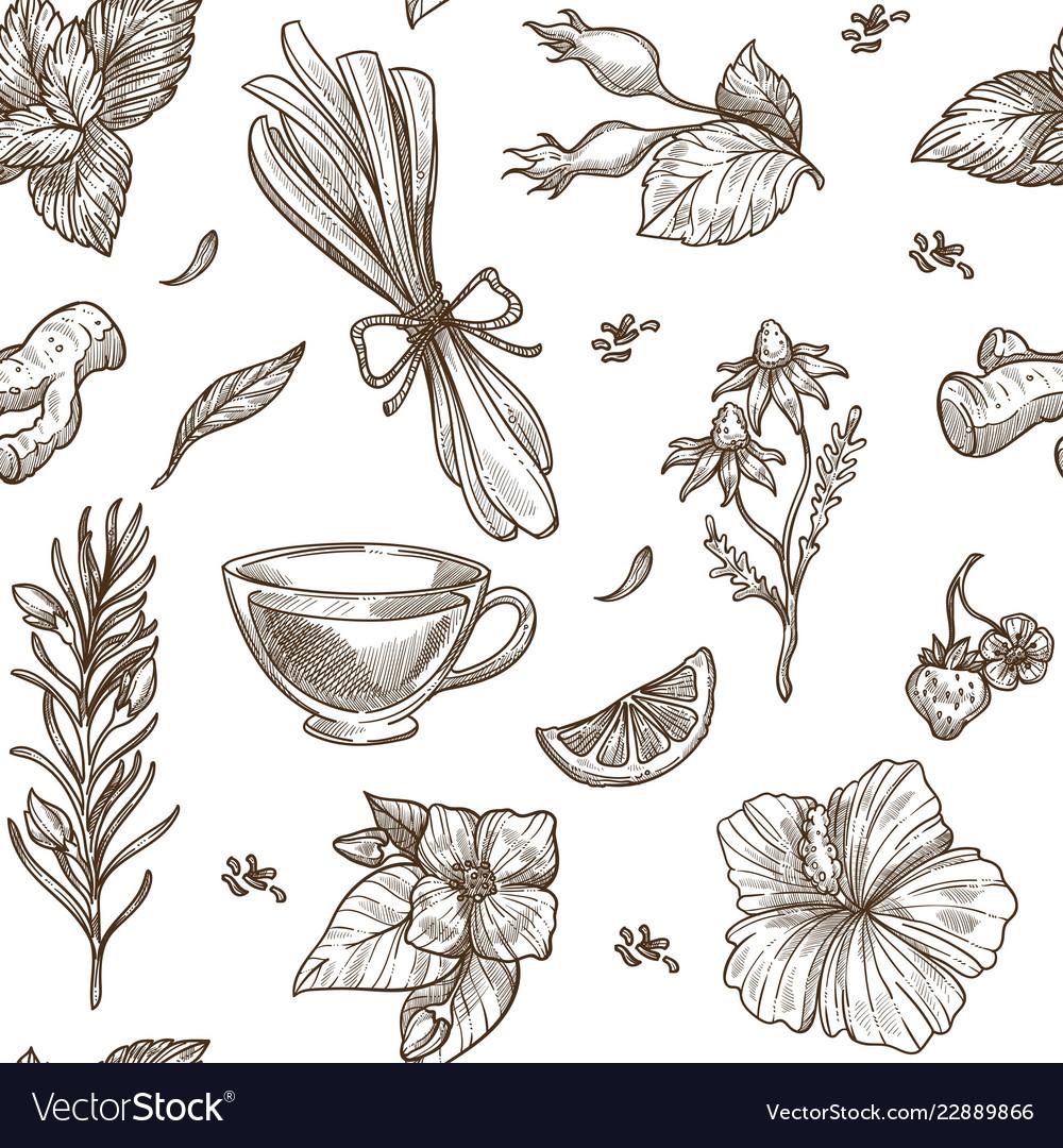 Herbs sketch pattern background seamless