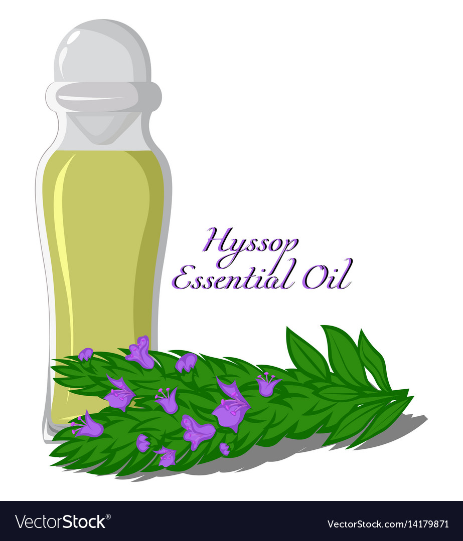 Essential oil of hyssop vector image