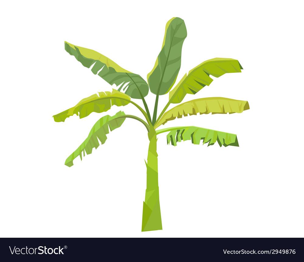 Banana Tree Royalty Free Vector Image Vectorstock
