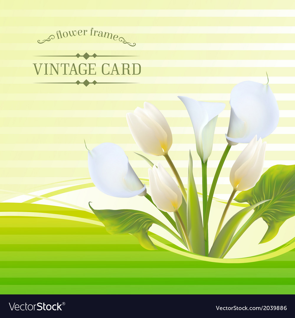 White tulip spring flowers bouquet for sale vector image mightylinksfo