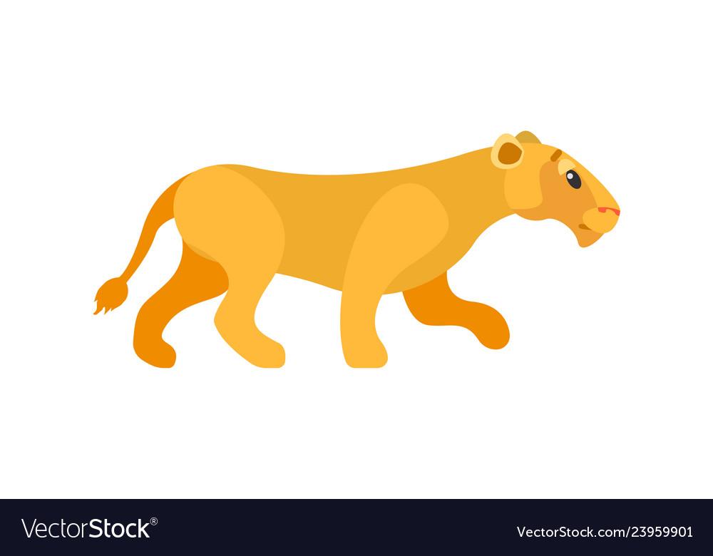 Dangerous cat lioness or wildlife animal