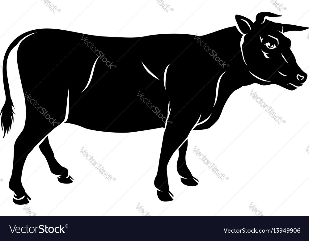 Cow or bull beef