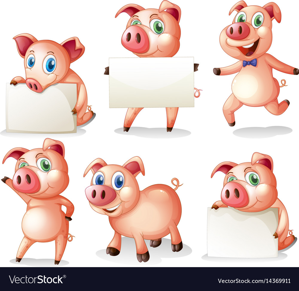 Pigs holding blank boards