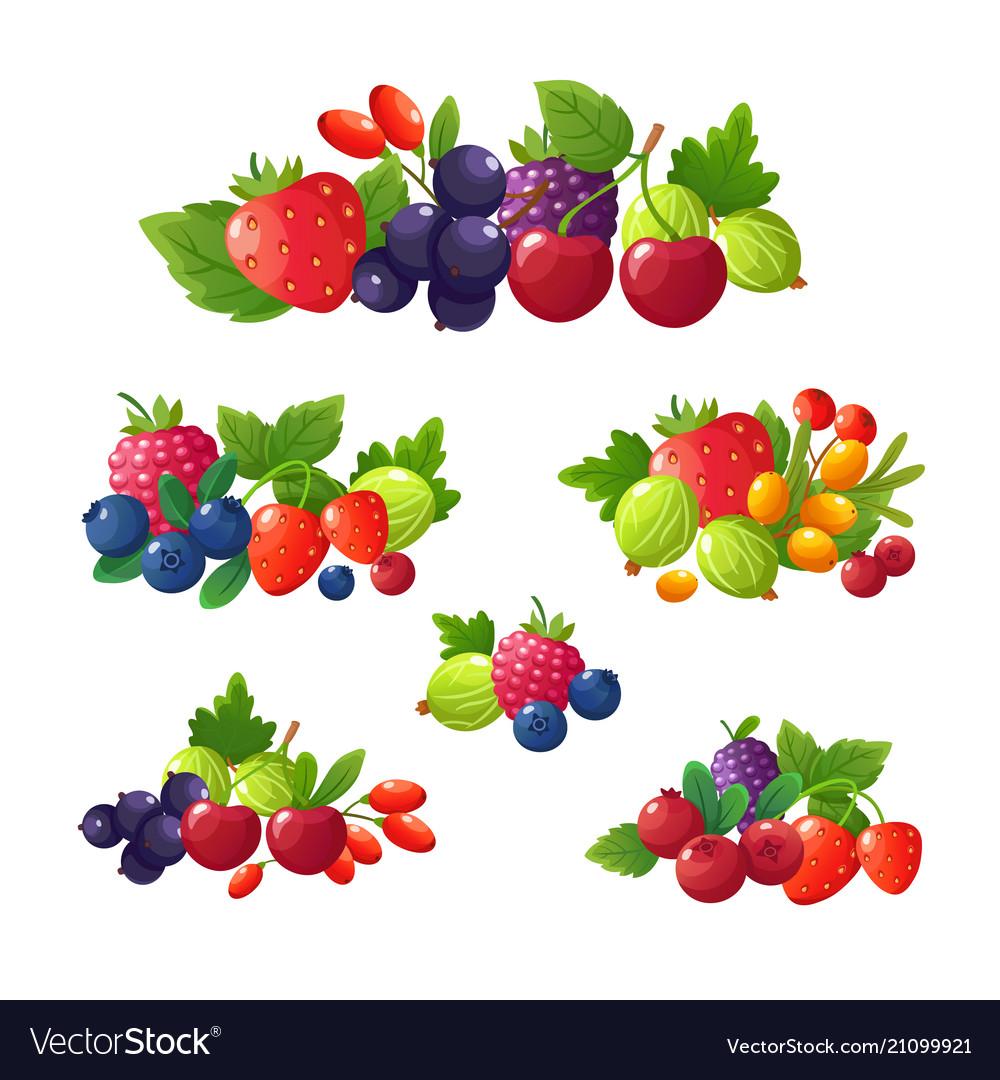 Fresh summer berries strawberry blackberry vector image