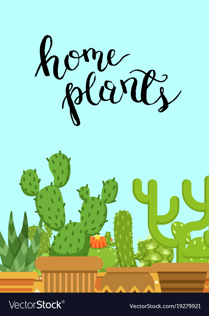 With cacti in pots in flat