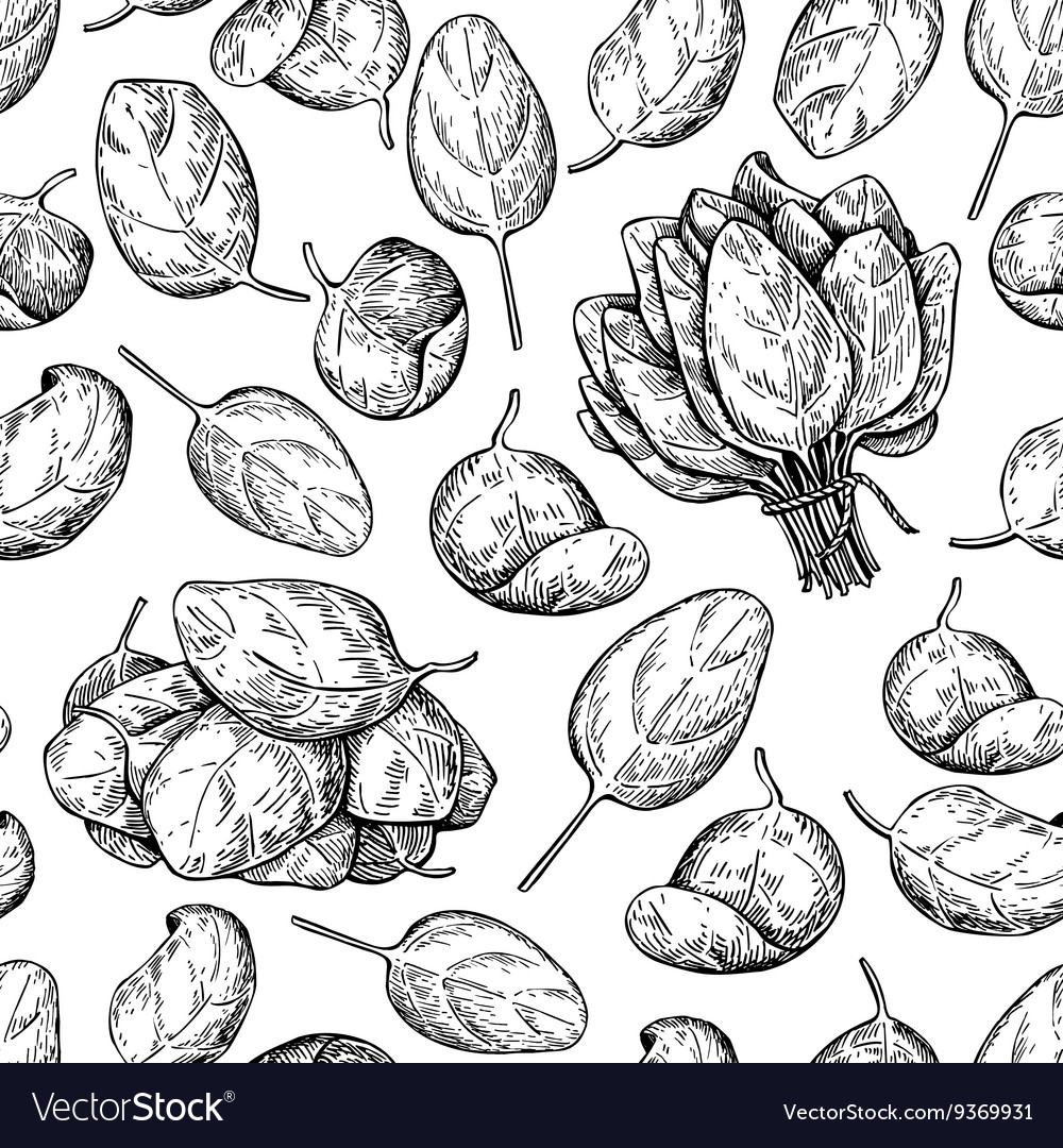 Spinach bunch and leaves hand drawn