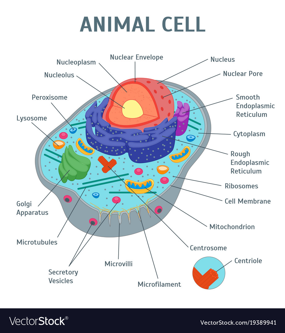Poster Plant Cell Diagram Project Not Lossing Wiring Diagram