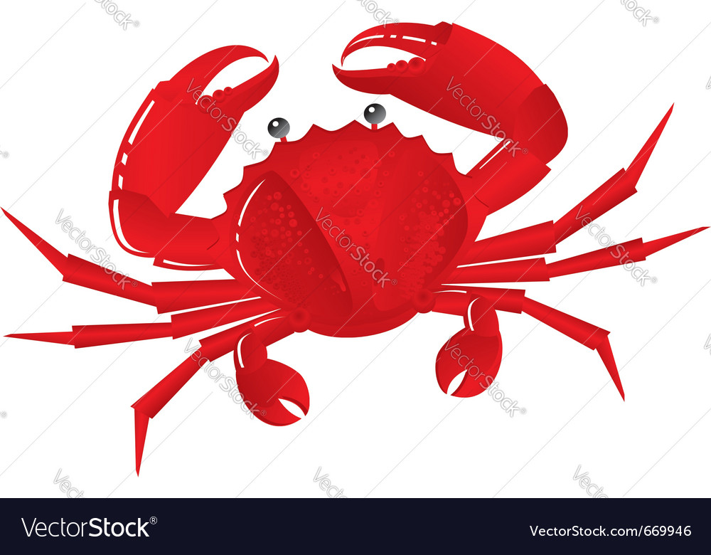 Boiled crab vector image