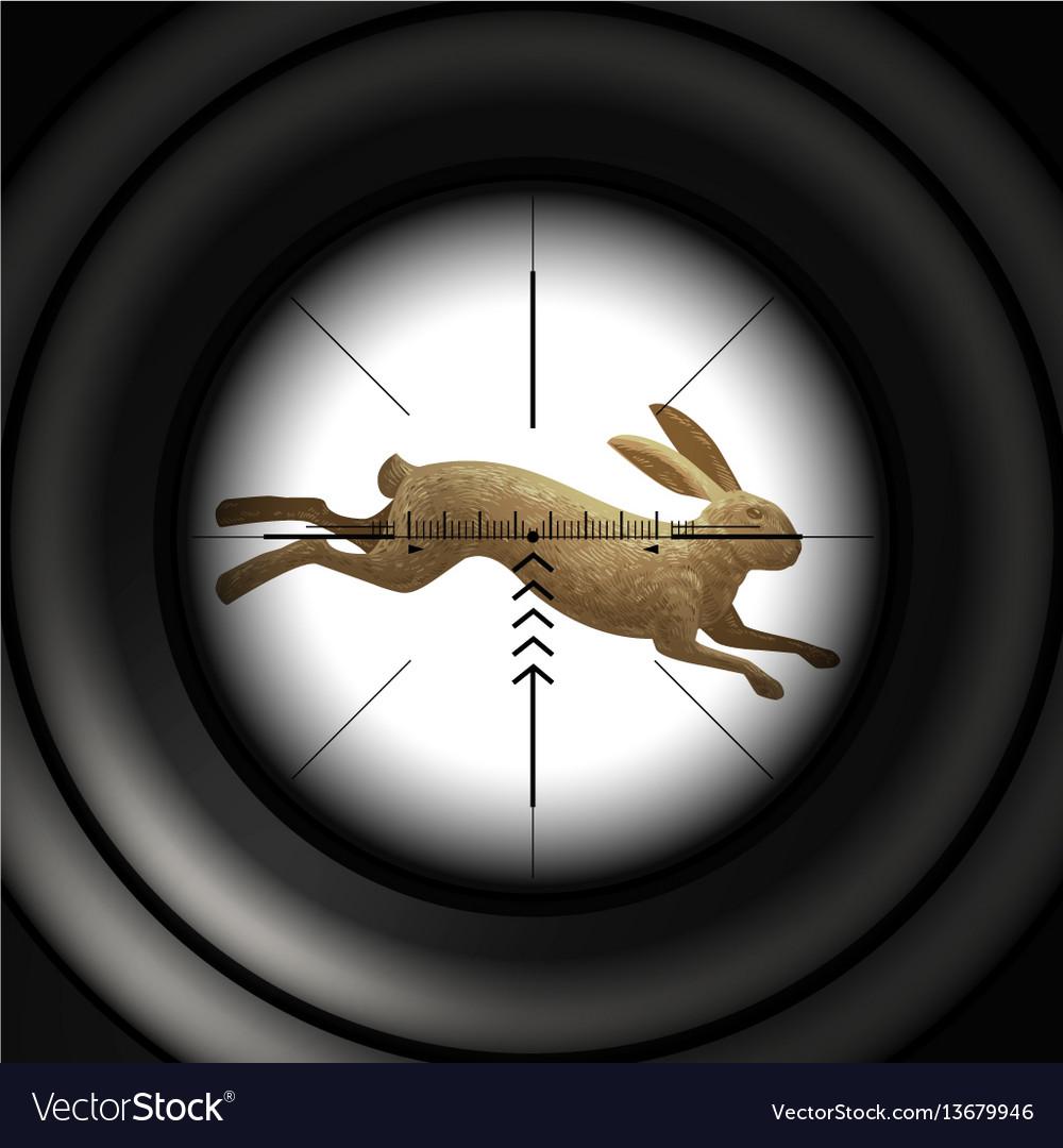 Hunting season running hare wild rabbit sniper