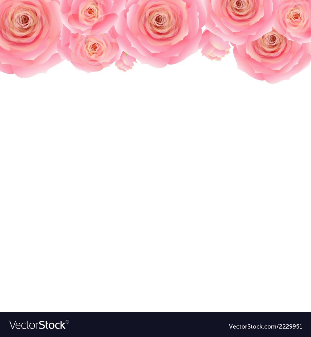 Pastel Pink Rose Border