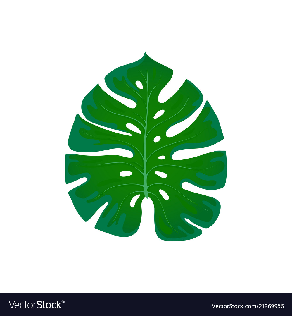 Foliage monstera trend element of the palm leaf