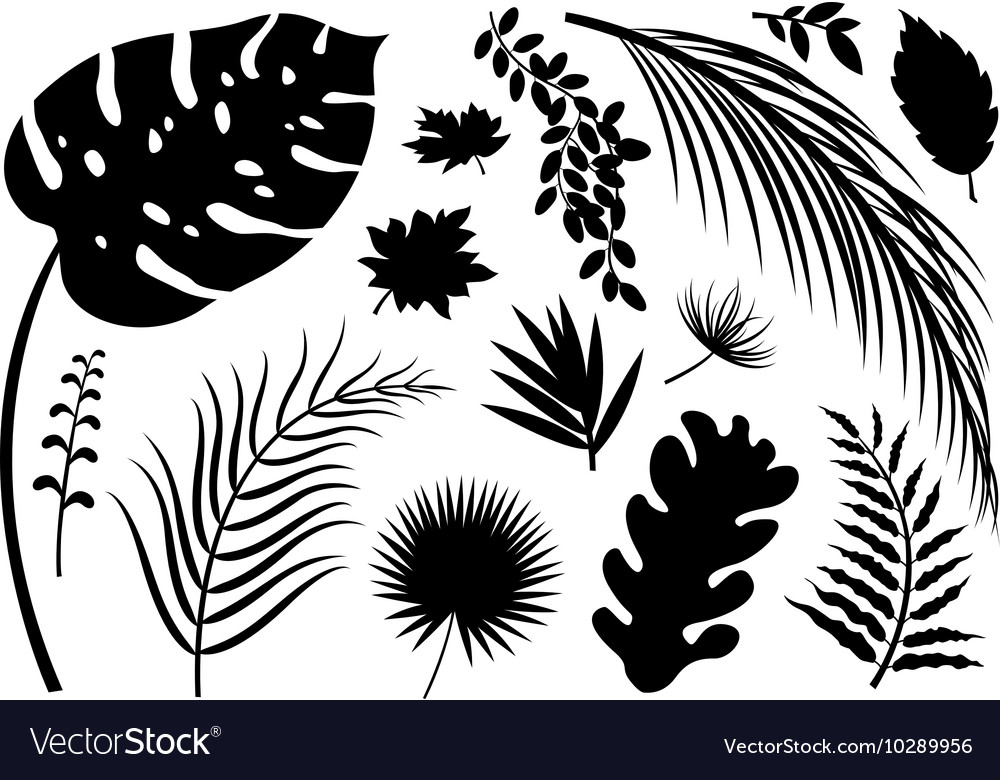 Set of silhouette leaves on white background vector image