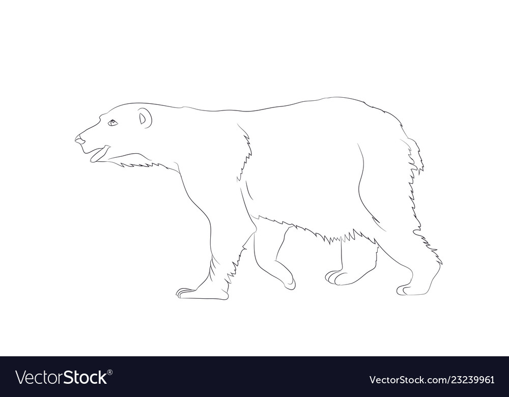 A bear that stands