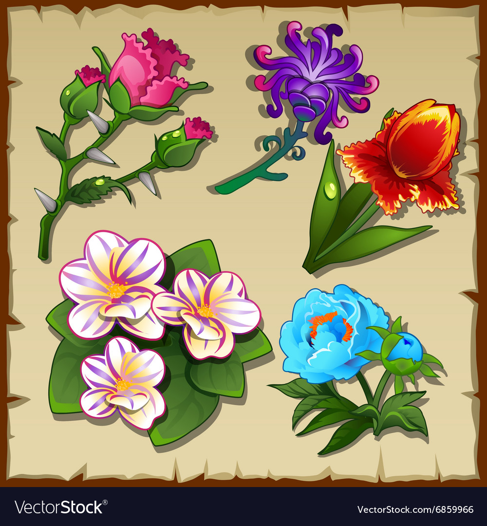 Bright set of five different types of flowers vector image