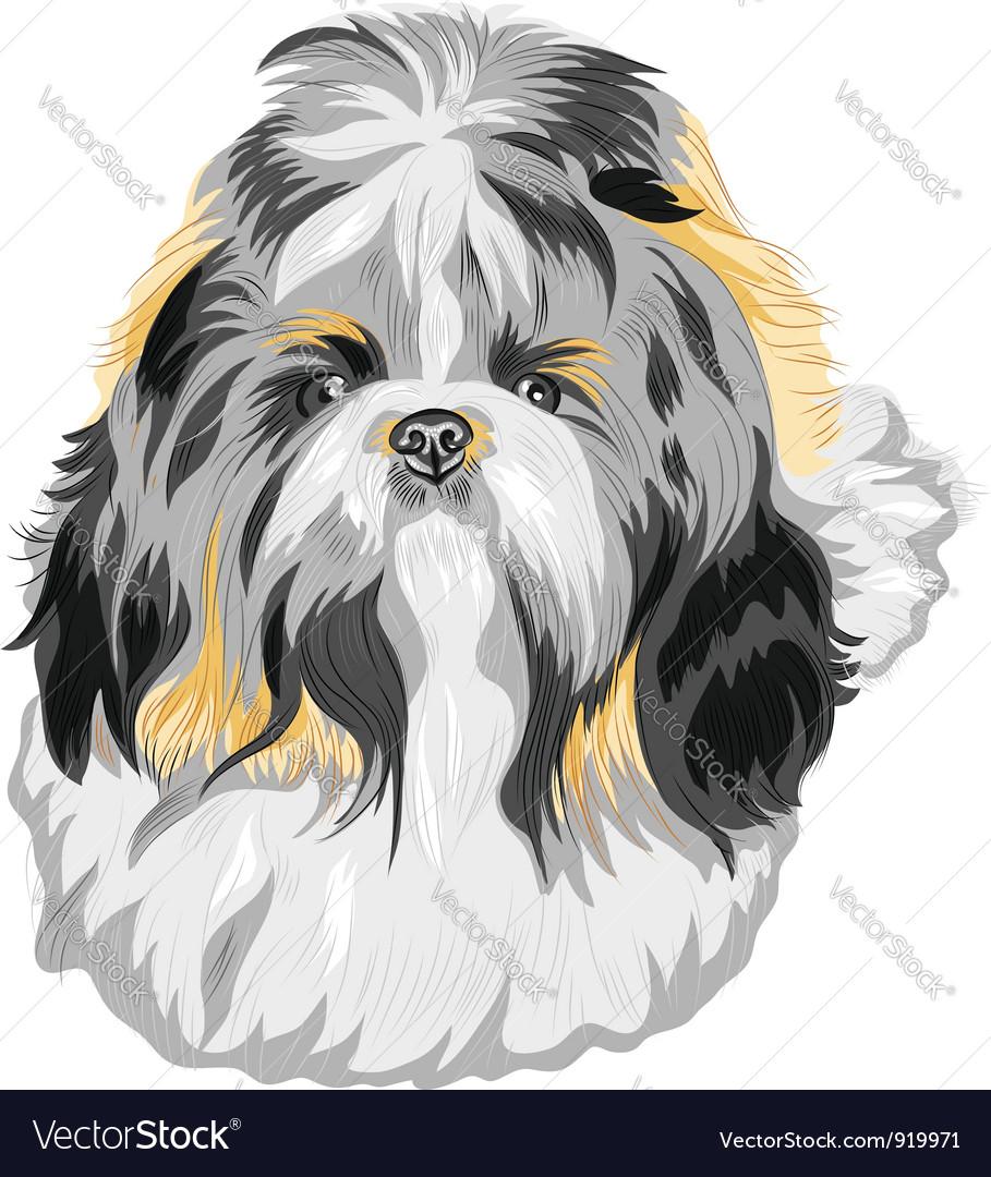 Shih Tzu Dog Royalty Free Vector Image Vectorstock