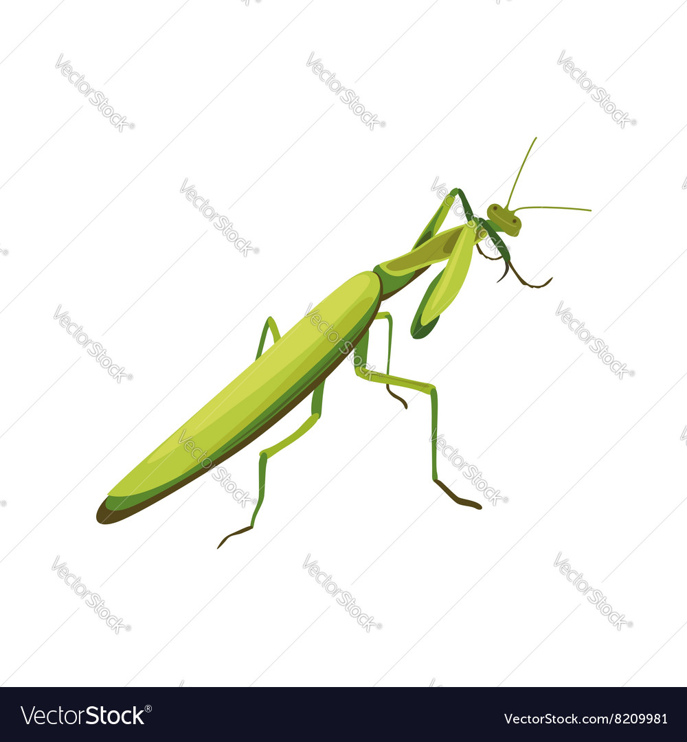 Mantis symbol of fighting style