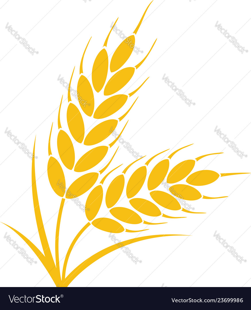 Bunch of wheat or rye ears with whole grain