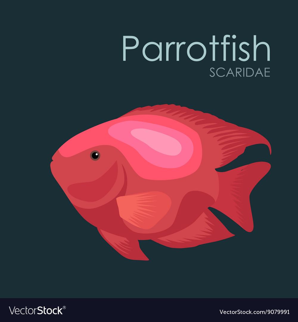 Aquarium fish Parrotfish Royalty Free Vector Image