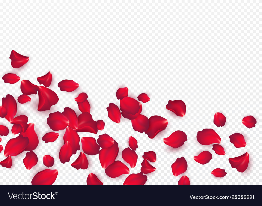 Backdrop rose petals isolated on a transparent