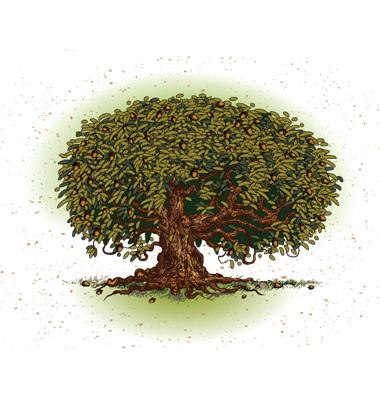 plytomurli free oak tree clip art